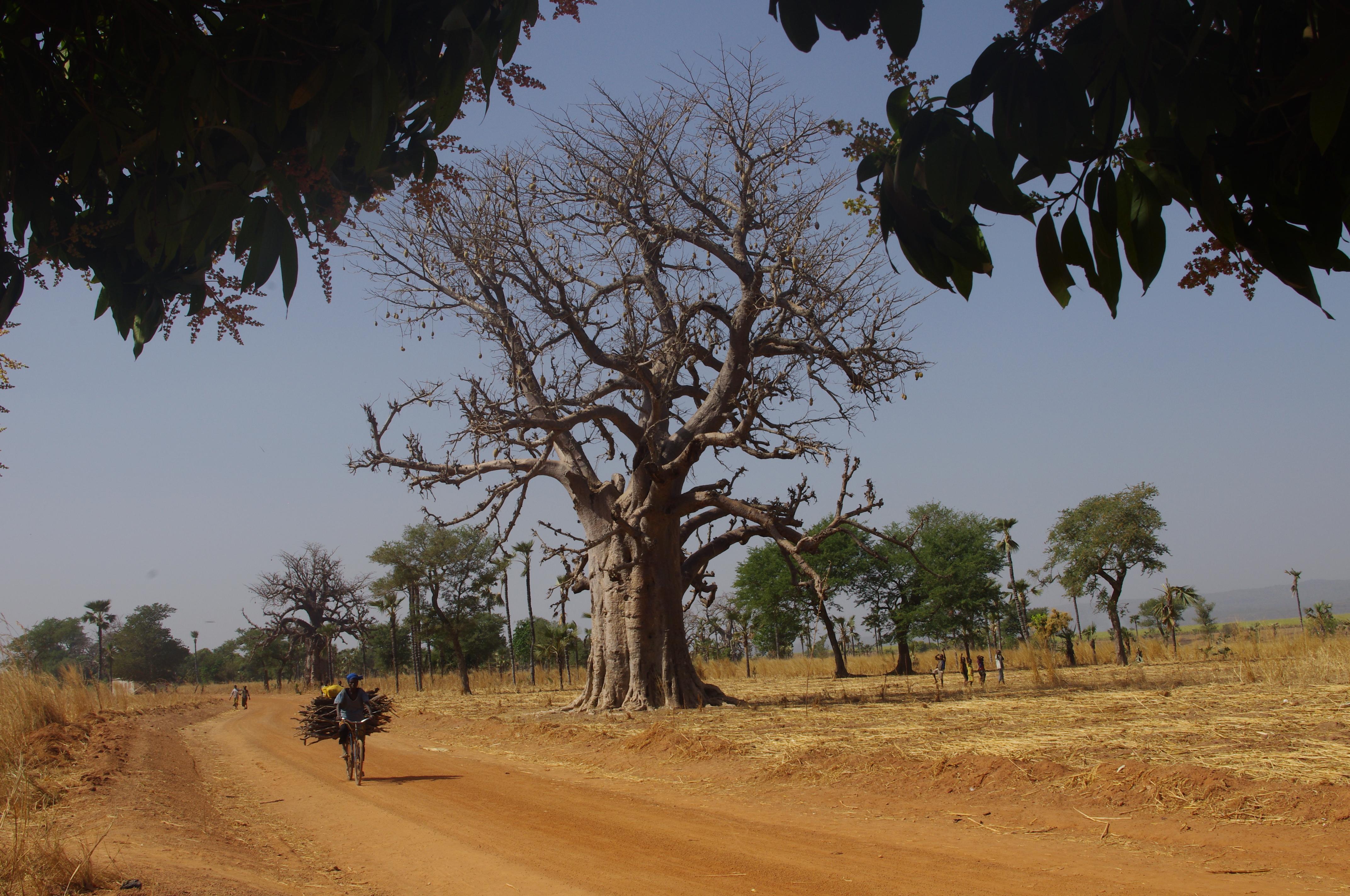 Route de Lémouroudougou