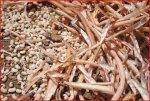 Semences génétiquement modifiées au Burkina : « La menace pèse maintenant sur le sorgho, le maïs et le niébé », selon Slow Food